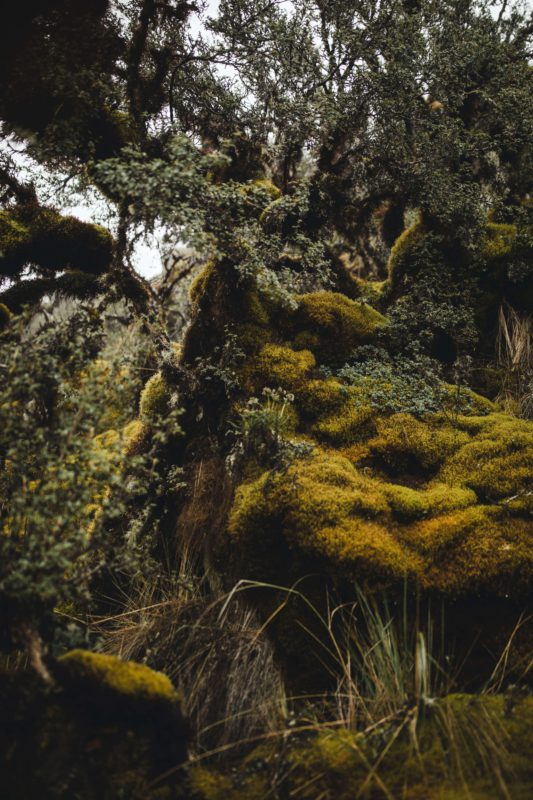 Mossy landsacpe