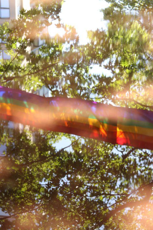rainbow flag in trees