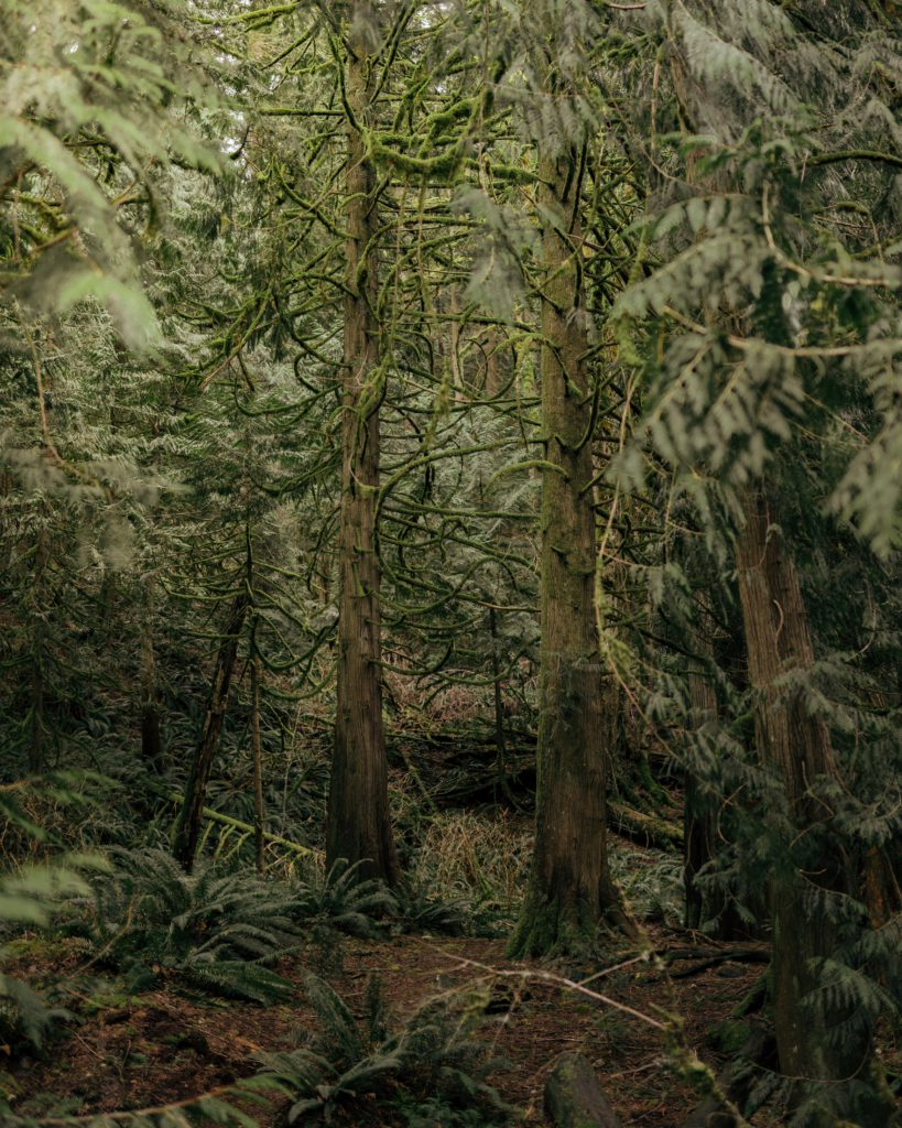 Coastal rainforest