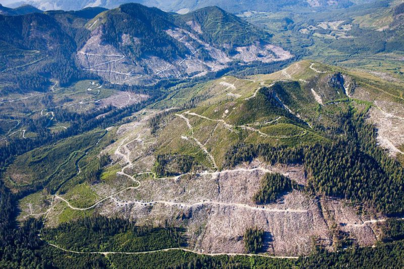 old growth aerial shot