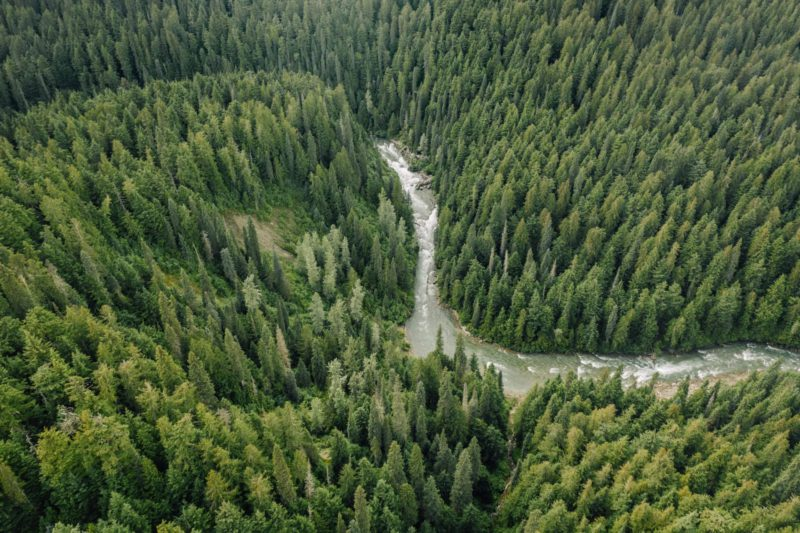 BC aerial of old growth