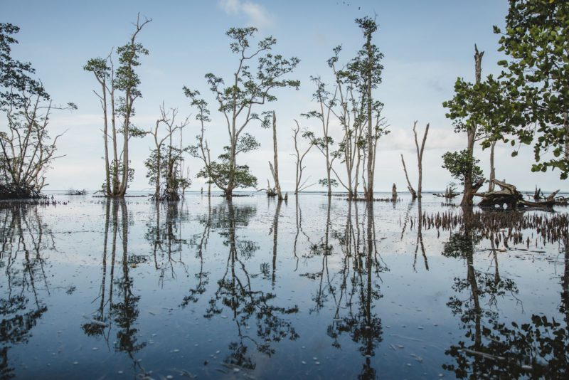 flooded forest reflection
