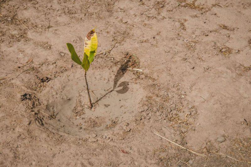planted seedling