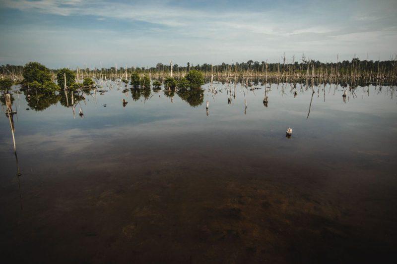 dead mangroves