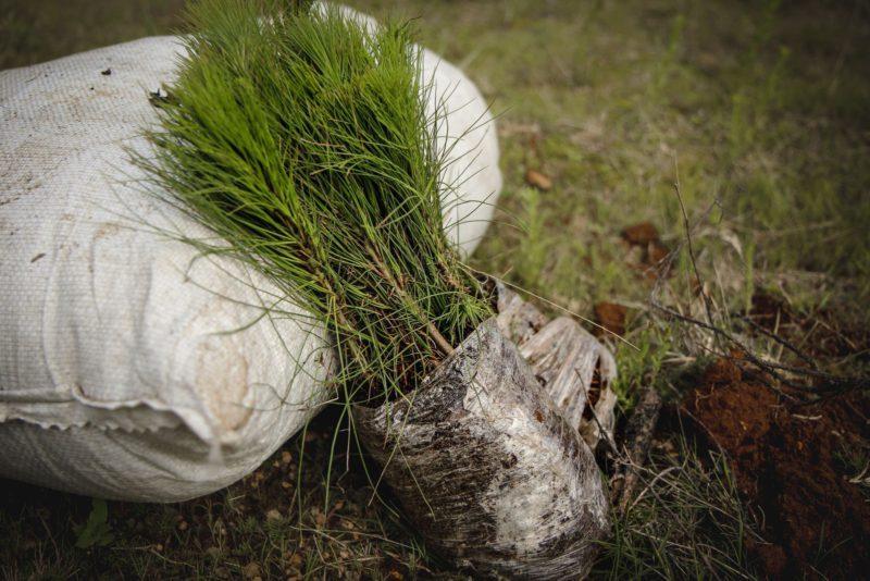 saplings in bag