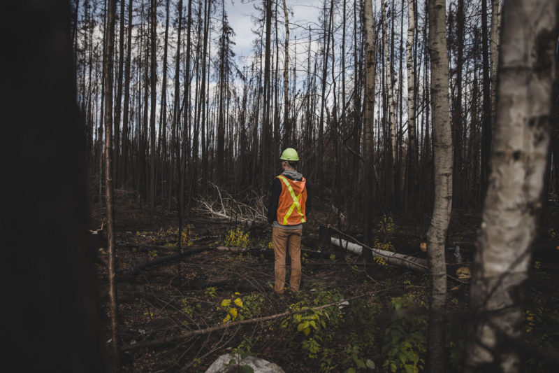 person in burnt forest