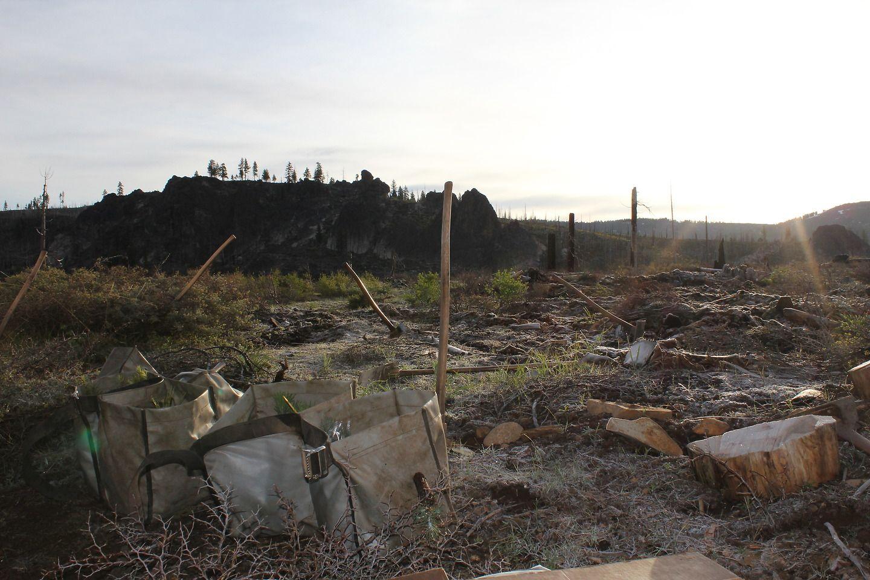 tree planting site