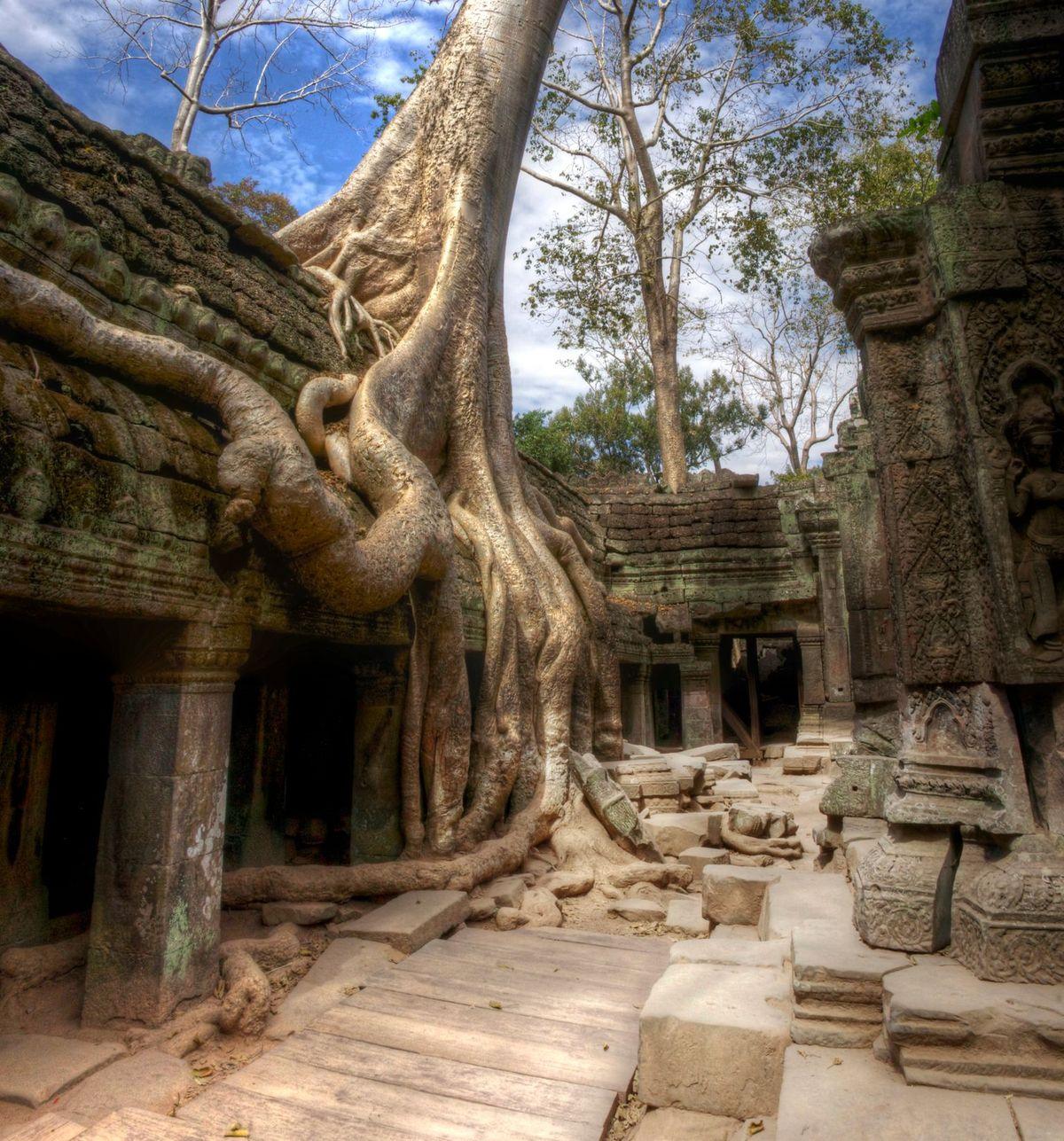 beng tree at tomb raider temple